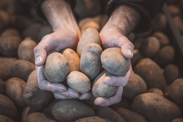 Hände mit Kartoffeln. Foto: Kerstin Bittner